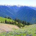 Hurricane Ridge. Olympic NP, WA