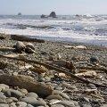 Pacific Ocean. Olympic NP, WA