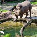 Animal Kingdom. Disney World. Orlando, FL