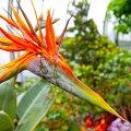 Botanic Garden. Washington, DC.